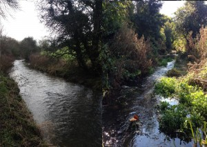 Habitat enhancement works completed last year on the Luckington Brook