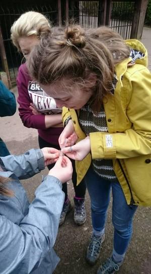 Identifying river invertebrates