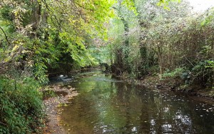 The Wellow Brook