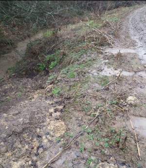 Lack of maize buffer resulting in run-off into the Rodden Brook