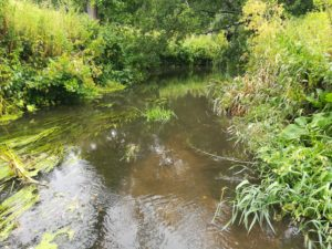 River Chew Fisheries Improvement Project